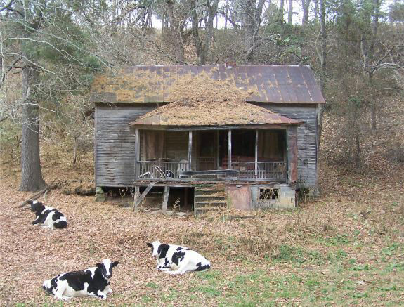 old-house-cows